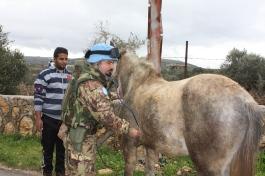 Brigata Pinerolo_Attività veterinaria in Libano_2