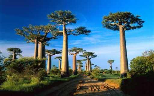 292_Landscape Madagascar - ngs1163965_2