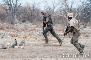 Molti volontari europei scendono periodicamente in Africa, a titolo gratuito, per dare il proprio contributo alla salvagurdia della fauna e quindi del futuro dell'Africa